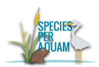 species per aquam